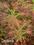 MGNANESHKUMAR